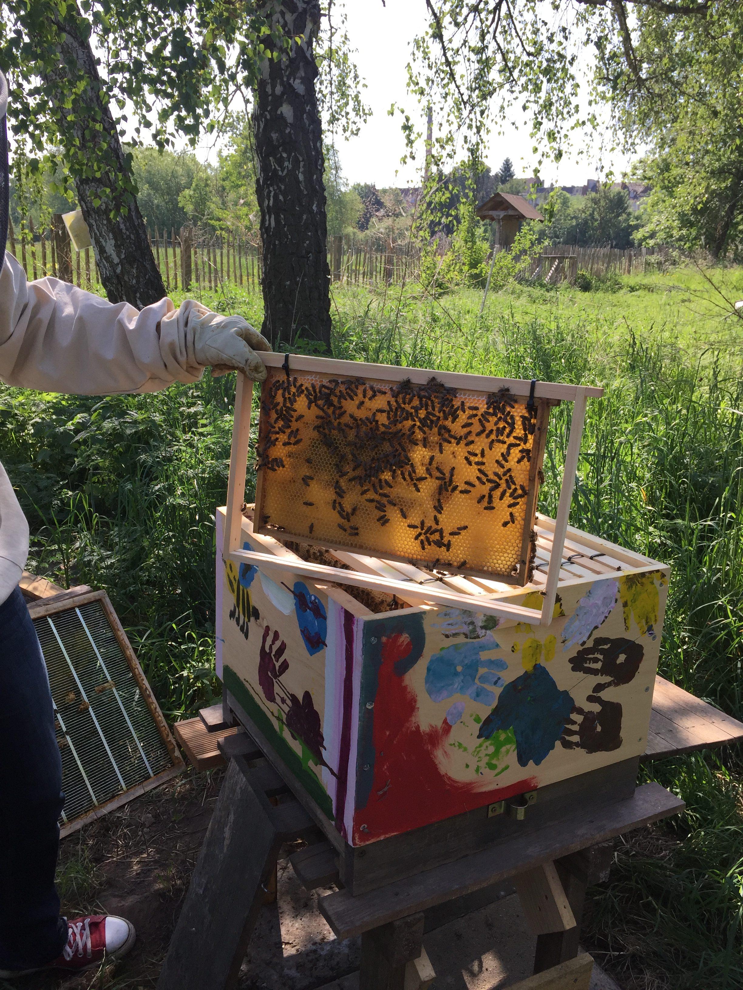"""Die Flex-Klasse Bienen beim """"Bienen-Projekt"""" auf dem Kinderbauernhof ..."""